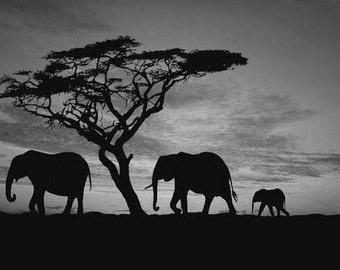 Safari Sunset, Landscape With Sunset Elephants Masai Mara Kenya Africa. Black & White Photography Picture, B And W Prints Framed / Unframed