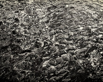 Beach Photography, Sand, Textures, Ocean, Abstract, Fine Art Black and White Photography, Landscape Photography, Wall Art, Home Decor