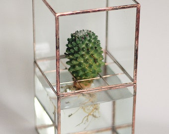 "Hydroponic terrarium ""HydroTerra"""