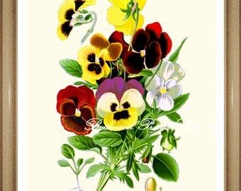 "Pansy Print. #3 Botanical Print. Pansies. Pansy Flower Print. 8x10"" 11x14"""