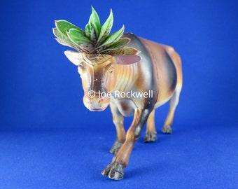 gaSTEERia GASTERIA STEER handmade upcycled succulent animal toy planter living art