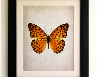 FRAMED Butterfly Print - Beautiful Large Orange Butterfly, Vintage Style, Shabby Chic, Wall Art Print, Handmade, Fab Picture Gift!!