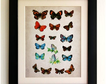 FRAMED Butterfly Print - Beautiful Butterflies, Vintage Style, Shabby Chic, Wall Art Print, Handmade, Fab Picture Gift!!