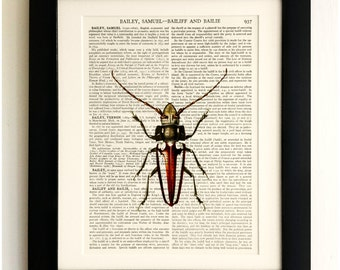 FRAMED ART PRINT on old antique book page - Insect, Beetle, Vintage Upcycled Wall Art Print Encyclopaedia Dictionary Page
