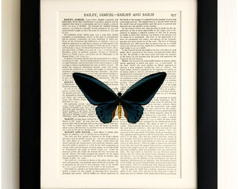 FRAMED ART PRINT on old antique book page - Big Black Butterfly, Insect, Vintage Upcycled Wall Art Print Encyclopaedia Dictionary Page