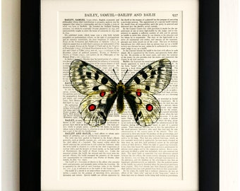 FRAMED ART PRINT on old antique book page - Big White Butterfly, Insects, Vintage Upcycled Wall Art Print Encyclopaedia Dictionary Page