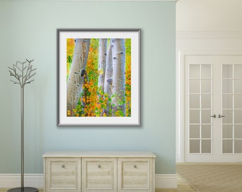 Large Fall Print, Aspen Grove Photo, Nature Fine Art, Large Sierra Nevada Decor, Orange Green, Canvas Gallery Wrap, Limited Edition Print