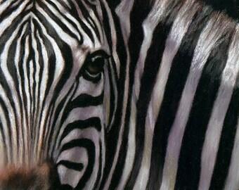 EYES OF AFRICA...Zebra
