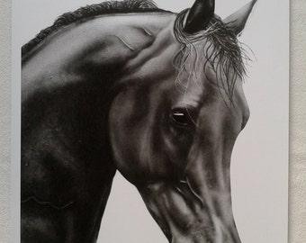 Artwork Print A3 Close Up Horse Picture