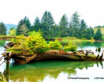 Nature Photography, River Photo, Landscape, Green, Trees, Art and Collectibles, Photography, Reflection, Oregon, Nurse Log, Fine Art