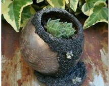 Golden Shimmer Crackle Glass Succulent Pot With Crushed Pyrite Accents & Black Sand - Indoor Globe Vase Planter - Outdoor Planter Garden Art