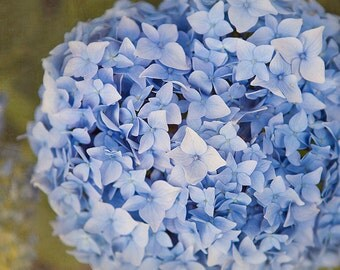 Blue Hydrangea, Nature photography, flower photography, wall decor, home decor, floral print FINE ART PRINT 9X6''