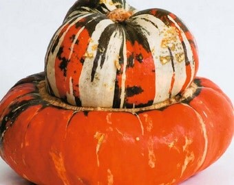 Gourd Turks Turban Vegetable Seeds (Cucurbita maxima) 15+Seeds