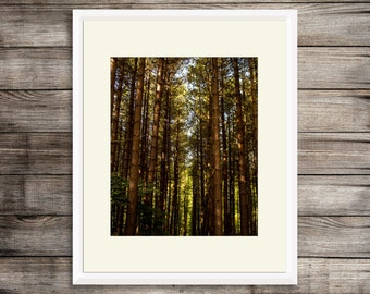 Digital Download - Woodland Walk