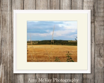 Digital Download Photography - Corn Field