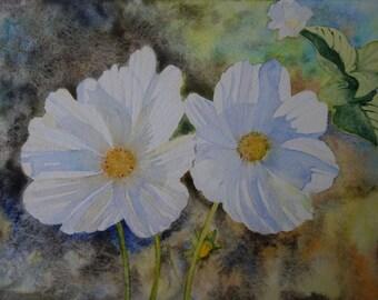 Aquarelle florale :deux cosmos blancs