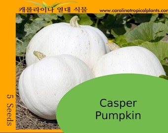 Casper - Ghost Pumpkin Seeds - 5 Seeds