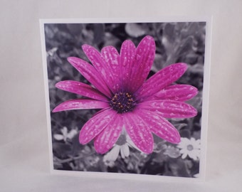 Splash of Colour: Daisy After The Rain (Square Blank General Use Card)