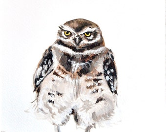 Burrowing Owl - Original Oil Painting