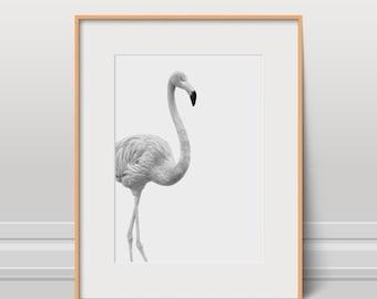 Flamingo Print, Bird Poster, Black And White, Instant Download, Kids Art, Nursery Wall Art, Animal Photo, Wild Art