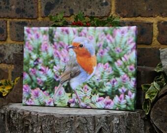 Robin bird on hebe canvas print
