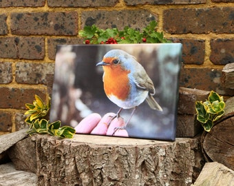 Robin bird sitting on hand canvas print,