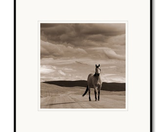 Black and white photography, sepia prints, horses, western, landscape, Colorado, framed photo, buckskin horse, equine, Adrian Davis