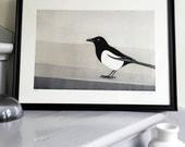 Magpie - Fine Art Giclée limited edition print of a bird