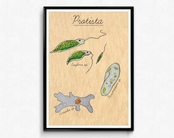 Protista Biology Poster - Watercolor Biology Art Print - Euglena,Paramecium,Amoeba,Protozoa-Vintage Poster-Science Wall Art - Biology gifts