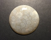 Large Translucent Natural Fossilized Indonesian Coral Gemstone Cabochon. Handcrafted in USA.