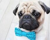 Dog Bowtie, Dog Costume, Cat Bowtie, Dog Bow Tie, Blue Bow Tie, Pug Costume, Pug Bowtie, Pug