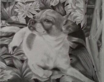 11x14 Inch Custom Pet Portrait From Your Photos, Graphite Pencil Pet Portrait, Custom Dog Portrait Drawing in Pencil, Pet Memorial Art