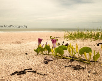 Flowers in the beach photography,instant download photography,Flagler Beach,Florida, mauve flowers,beach art, cloudy beach art,green leaves