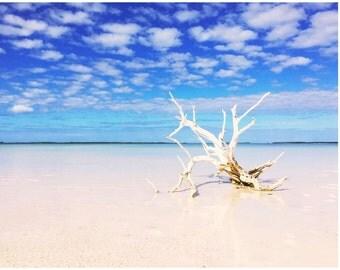 Briland Lone Tree, Harbour Island, Bahamas Beach Print