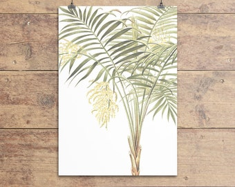 Chamaedorea Lunata Palm botanical vintage illustration print