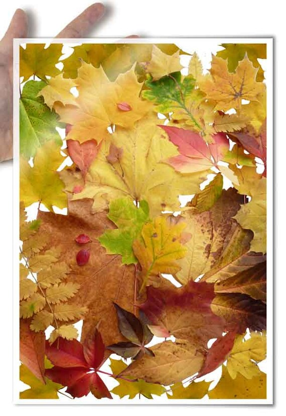 Decoupage Paper • foliage autumn leaves indian summer • for mod podge decopatch scrapbooking