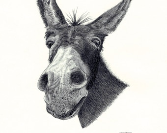 DONKEY head portrait Limited Edition art drawing print signed by UK artist