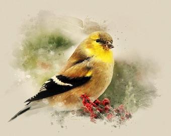 Wildlife Print, American Goldfinch, Nature Decor, Bird Art, Fine Art Print, Bird Print, Pictures of Birds, Watercolor Bird, Art Gifts