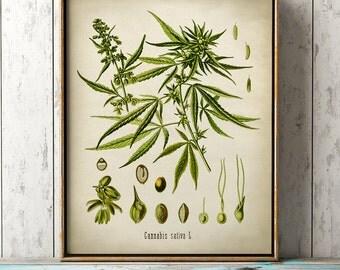 Cannabis Sativa botanical print, Cannabis print,  antique Cannabis poster,  Cannabis art, botanical print, wall decor