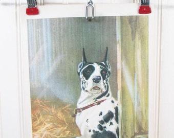 Vintage Dog Print Great Dane Diana Thorne Color Illustration Book Plate