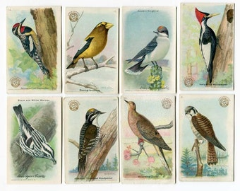 Set of 8 Antique Arm and Hammer Birds of America Cards for Scrapbooks Cards Collection by ME Eaton, Louis Fuertes, 1915-20's