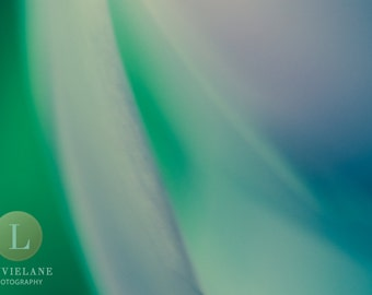 Go with the Flow - Nature Photography - 11x14 fine art print - abstract - modern home decor - kelly green lavender aqua blue