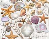 Seashells digital scrapbooking graphics / clipart / altered art / mixed media collage / instant download / printable