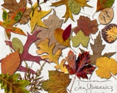 Autumn Splendor Leaves digital scrapbooking graphics / clipart / instant download / printable