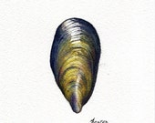 Original watercolour shell painting ~ mussel shell