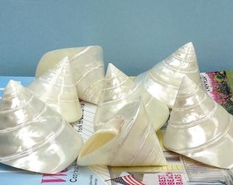 Beach Decor - Pearl Trochus Shell - seashells bulk shells beach wedding nautical sea shells coastal