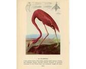 1950 PINK FLAMINGO LITHOGRAPH flamingo original vintage bird print