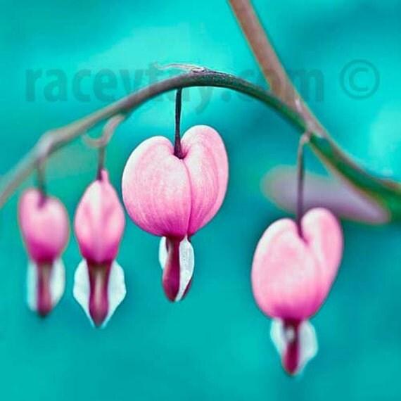 Teal Wall Art, Blue, Pink, Flower Photography, Girl Nursery Decor, Teal Decor Print, Bleeding Hearts, Flower Photo