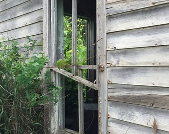 Old abandon building-summer photography-old building photo-forgotten home -abandon(5 x 7 Original fine art photography prints) FREE Shipping