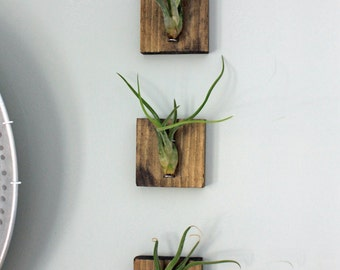 Mounted Air Plants // Medusa's Head Air Plants // Living Art // Uniqe Wall Decor, tillandsia, airplants, home decor, living home decor, gift